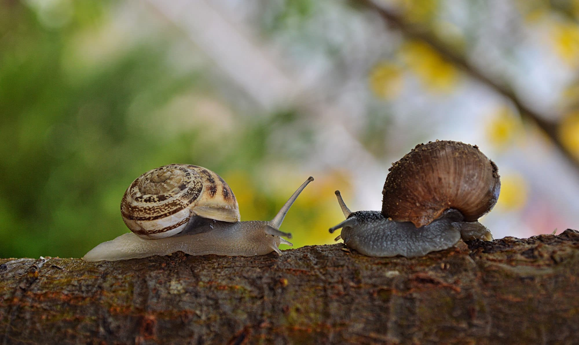 HR.com: Want To Be A Better Leader? Don't be a slug.